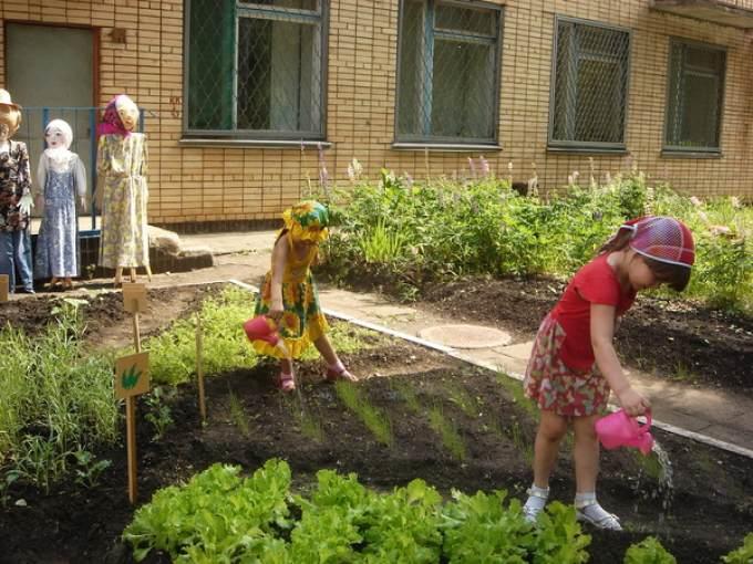 Картинки огород на улице в детском саду